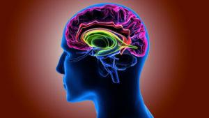 Brain spinal pinal Cord Injuries
