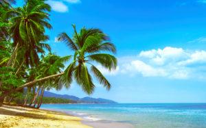 palm tree at beach